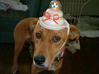 mydog[1].jpg